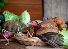Poule dans le panier avec des oeufs parmi les divers types de légume sur la table dans la cuisine photographie stock
