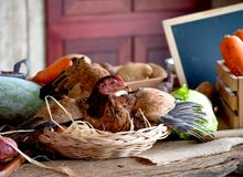 Poule dans le panier avec des oeufs parmi les divers types de l?gume sur la table dans la cuisine photo libre de droits