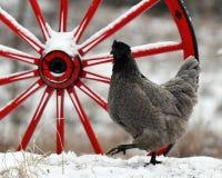 Poule se tenant prêt de vieilles roues en bois dans la neige dans le paysage hivernal photos stock