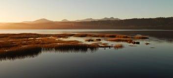 Poules d'eau sur le lac Images libres de droits