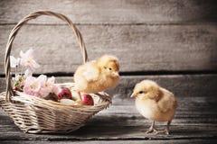 Poulet avec des oeufs de pâques sur le fond en bois Photographie stock libre de droits