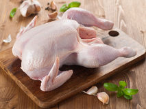 Poulet cru Photo stock