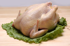 Poulet cru Images stock