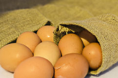 Poulet d'oeufs dans le sac à chanvre Image stock
