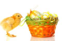 Poulet de chéri et oeufs de pâques sur le blanc photographie stock