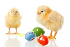 Poulet de chéri et oeufs de pâques sur le blanc photographie stock libre de droits