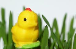 Poulet de massepain, décoration de Pâques Photos libres de droits