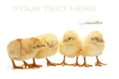 Poulet de Pâques Photo libre de droits