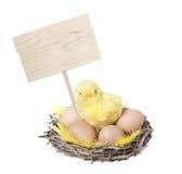 Poulet de Pâques Photographie stock