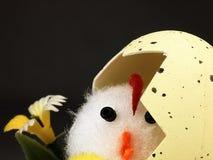 Poulet de Pâques sortant de l'oeuf Images stock