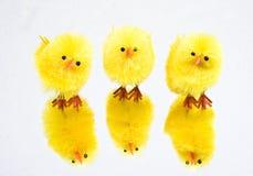 Poulet de trois Pâques Image libre de droits