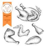 Poulet de viande fraîche Illustration gravée par cru illustration de vecteur