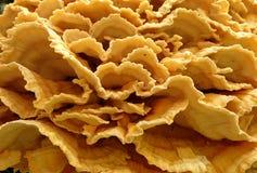 Poulet des mycètes en bois images stock