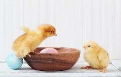 Poulet et oeuf de pâques sur le fond blanc photographie stock libre de droits