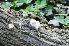 Poulets ébréchés se situant dans les bois Le hibou reste après le repas image stock