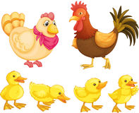 Poulets Image stock
