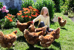 Poulets alimentants de fille photos libres de droits