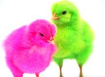 Poulets colorés Photos stock