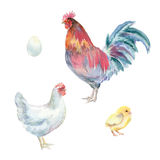 Poulets d'aquarelle Photo stock