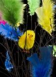 Poulets dans les clavettes Photo libre de droits
