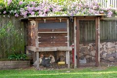 Poulets dans une arri?re-cour Hen House photographie stock libre de droits