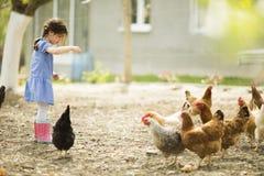 Poulets de alimentation de petite fille photos libres de droits
