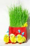 Poulets de Pâques Photos libres de droits