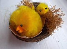 Poulets de P?ques photos stock