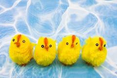 Poulets de source photo stock