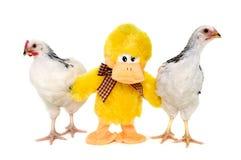 Poulets et canard de jouet Image libre de droits