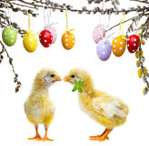 Poulets et oeufs de pâques Photo libre de droits