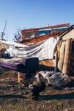 Poulets et vieux sofa sale dans un domaine vide photographie stock libre de droits