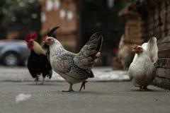 Poulets sur la rue en Thaïlande photos stock