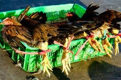 Poulets vivants à vendre au marché de Saigon image stock