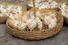Poulets vivants à vendre sur le marché dans Kolkata Photo stock