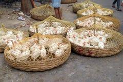 Poulets vivants à vendre sur le marché dans Kolkata Photos libres de droits