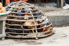 Poulets vivants sur la rue prête à être vendu par des commerçants au marché de nourriture dans Toliara madagascar photos libres de droits