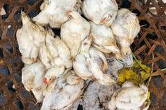 Poulets vivants sur un march? de nourriture ville courante de coucher du soleil de forme de bel Indon?sie d'?le de bali homme de  images stock