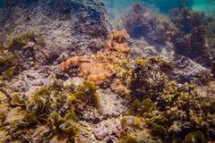 poulpe Photo libre de droits