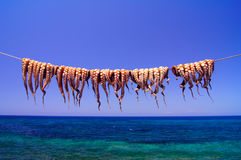 Poulpe accroché sur la corde par la mer image libre de droits