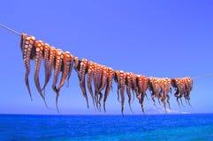 Poulpe accroché sur la corde par la mer images libres de droits