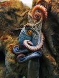Poulpe coloré s'élevant  photo stock