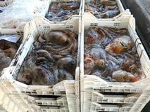 Poulpes et poulpes fraîchement pêchés Photos libres de droits