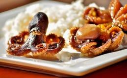 Poulpes frits ou cuits au four délicieux de bébé Photo stock