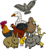 Poultry. Vector illustration of group of small domestic animals Royalty Free Stock Photos
