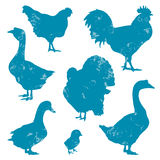 Poultry. Farm birds vector silhouettes Royalty Free Stock Image