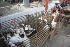 poultry fotografía de archivo
