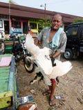 poultry imagen de archivo