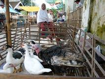 poultry imagenes de archivo