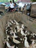 poultry imagen de archivo libre de regalías